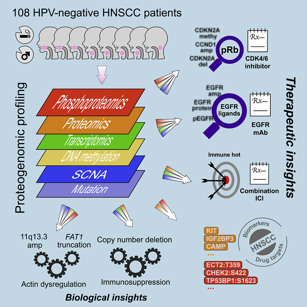 Image for project HPV-negative HNSCC – USA